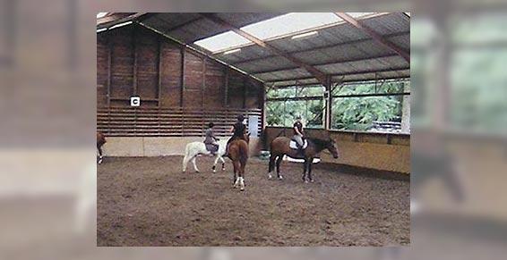 équitation - Leçon d'équitation sur chevaux