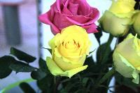 aux fleurs de l'aulne 282.JPG