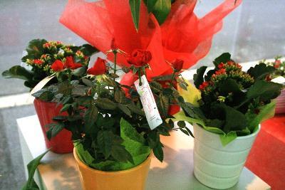 aux fleurs de l'aulne 022.JPG