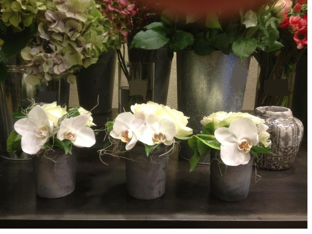 .Phalaenopsis dans leur petit pot