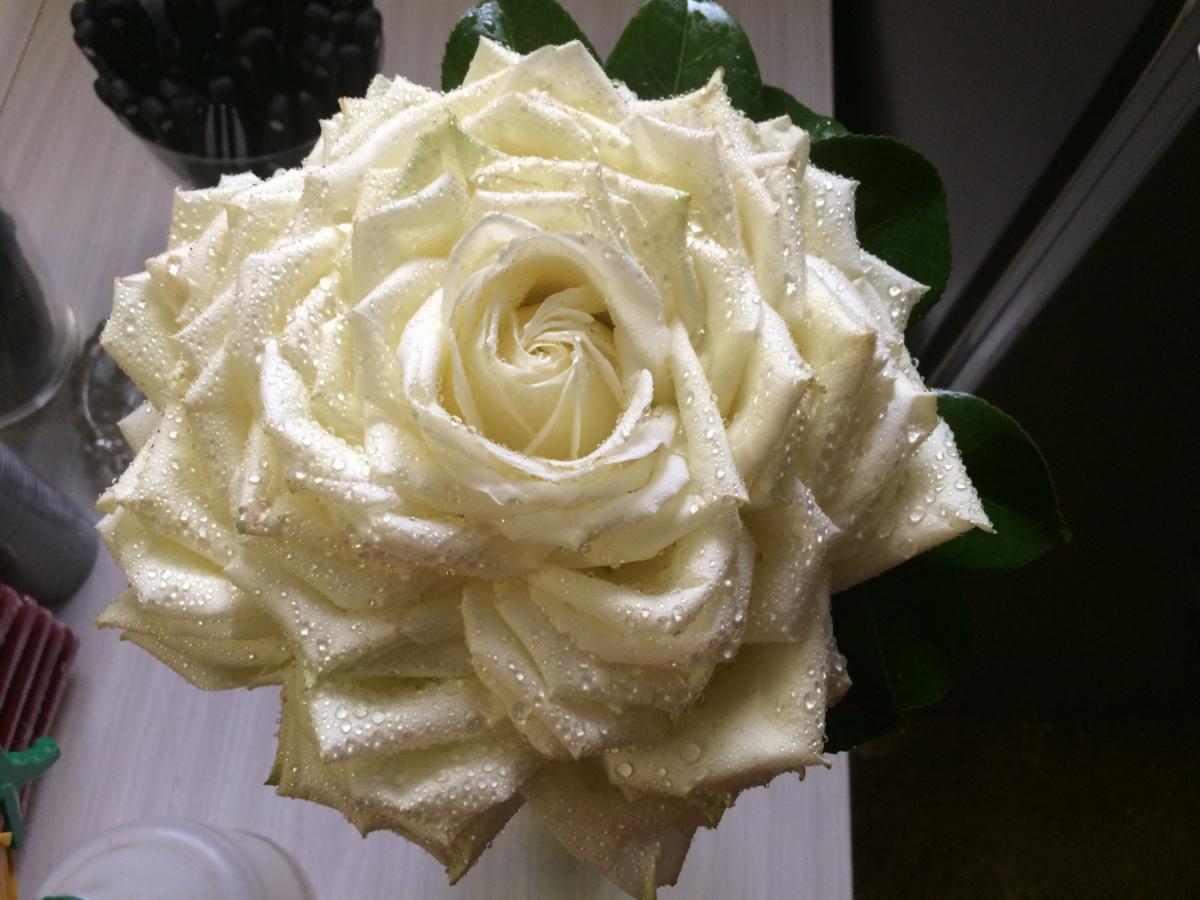 Rose reconstituée pour une mariée
