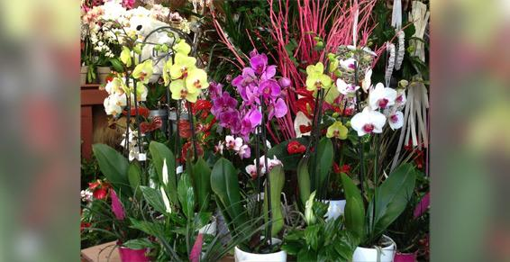 Specialiste orchidees Garches