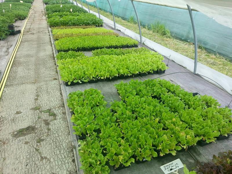 Large choix de plantes à Châteauroux