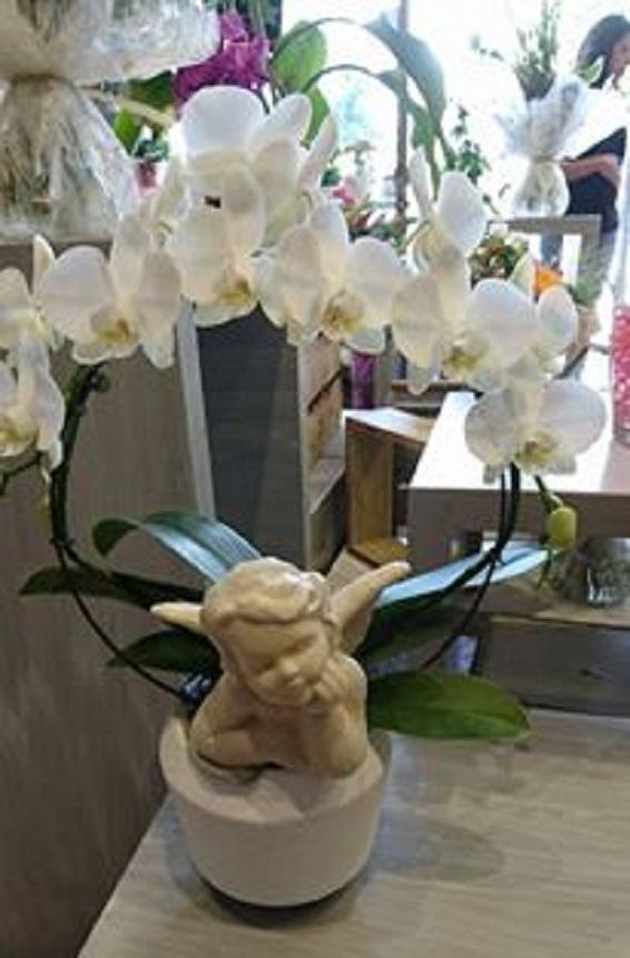 Orchidée et ange