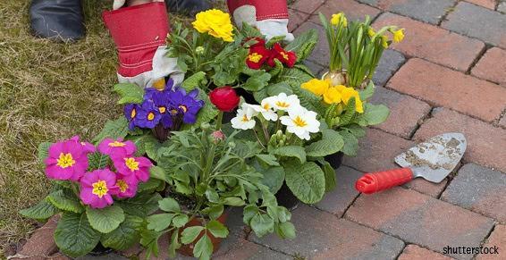 Fleuristes - Planter des fleurs et des plantes