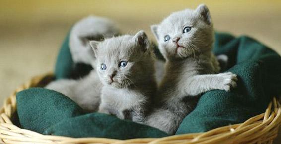 Pensions pour chats à Ittenheim