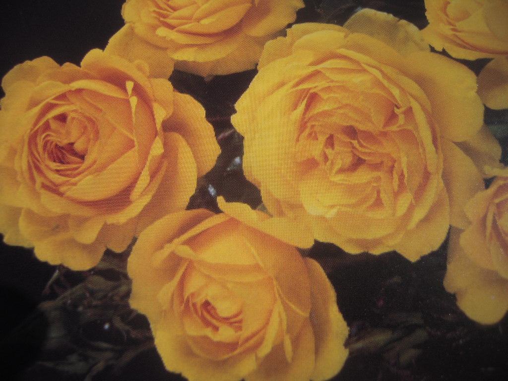 Eurostar rosier buisson3