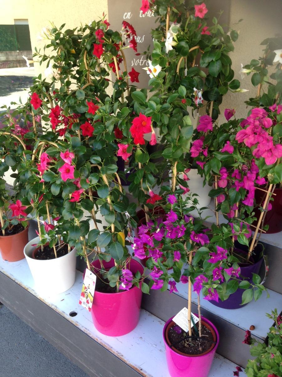 Vente de plantes d'extérieurs Lola Fleurs Ales