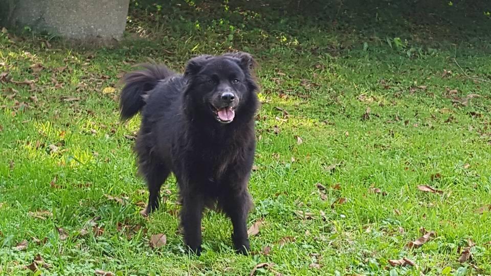 pension canine à Melgven entre quimper et concarneau finistère sud 29.jpg
