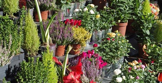 Aux Fleurs De Fabienne à Creutzwald - Fleuristes