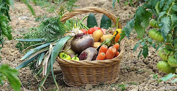 Paniers de fruits et légumes, à Toulouse, composés à votre choix