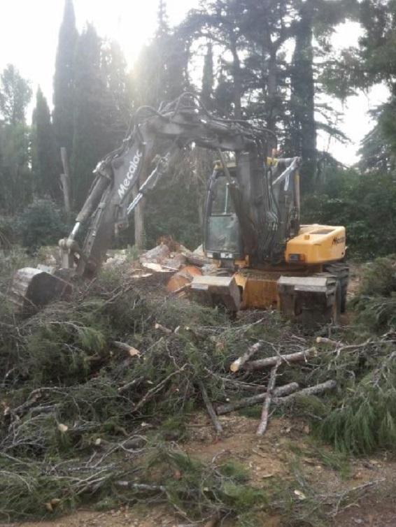Florian Pillot Espaces Verts, élagage et abattage d'arbres à Marseille