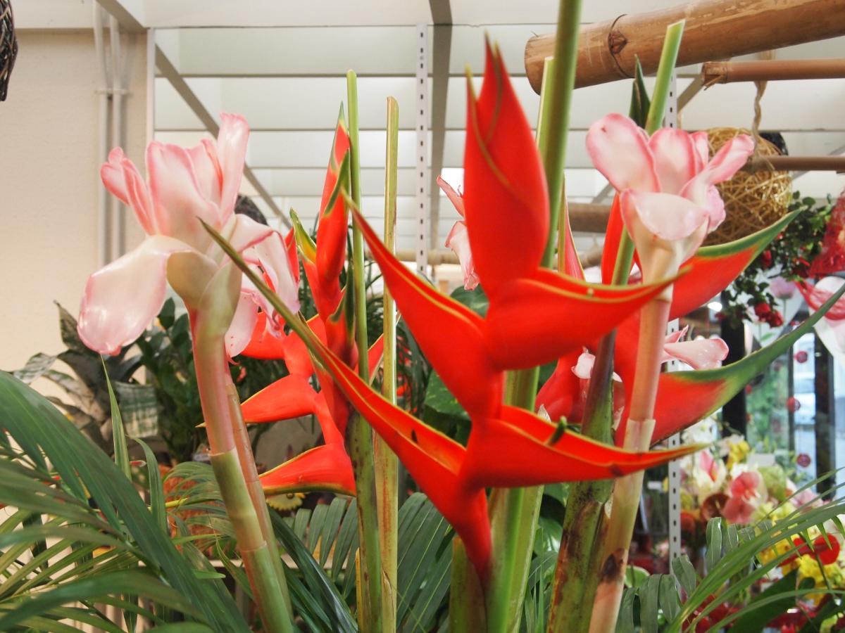 Fleurs exotique , arrivage régulier