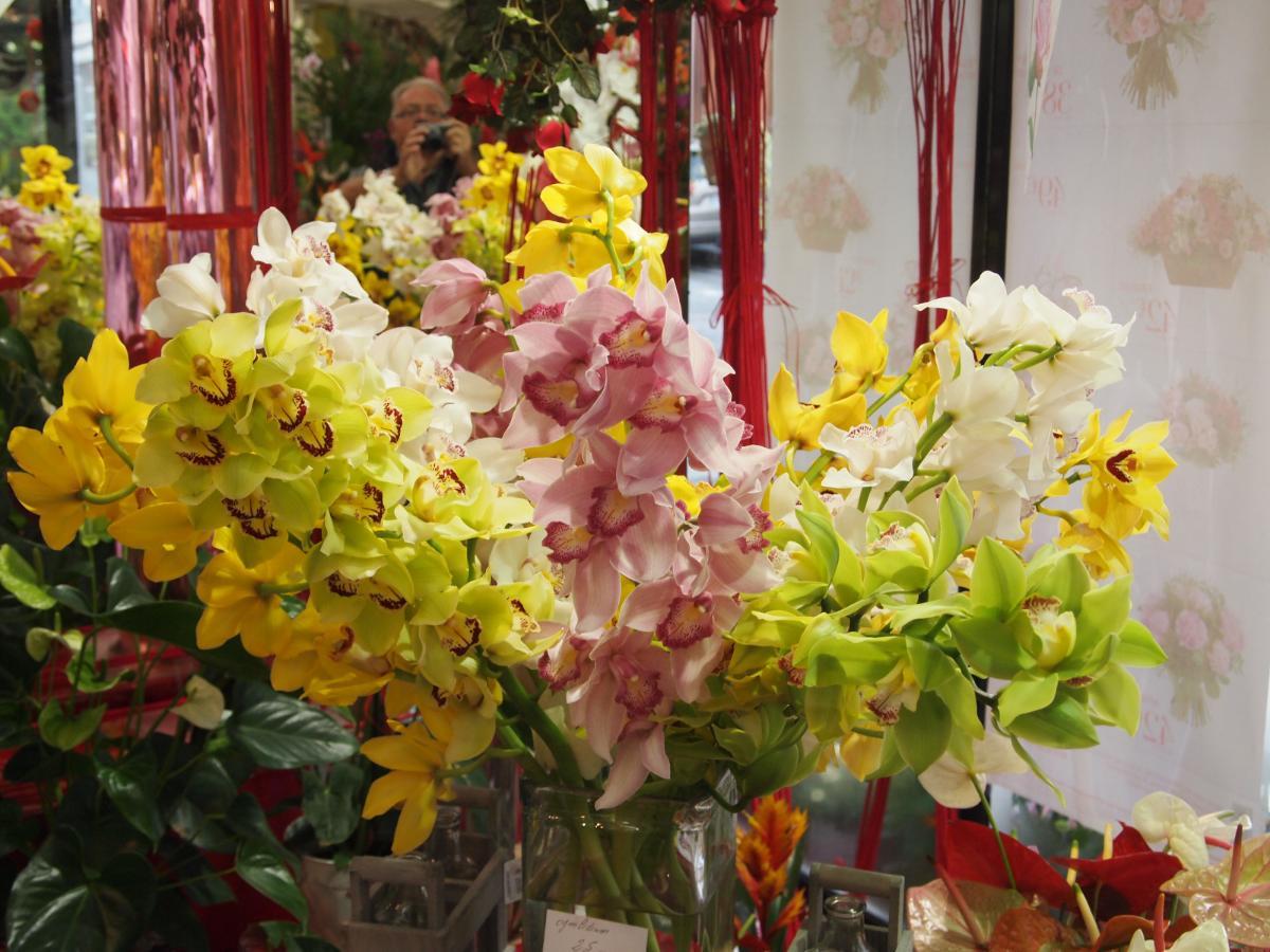 Orchidée cybydium : Tarif au 0297362051