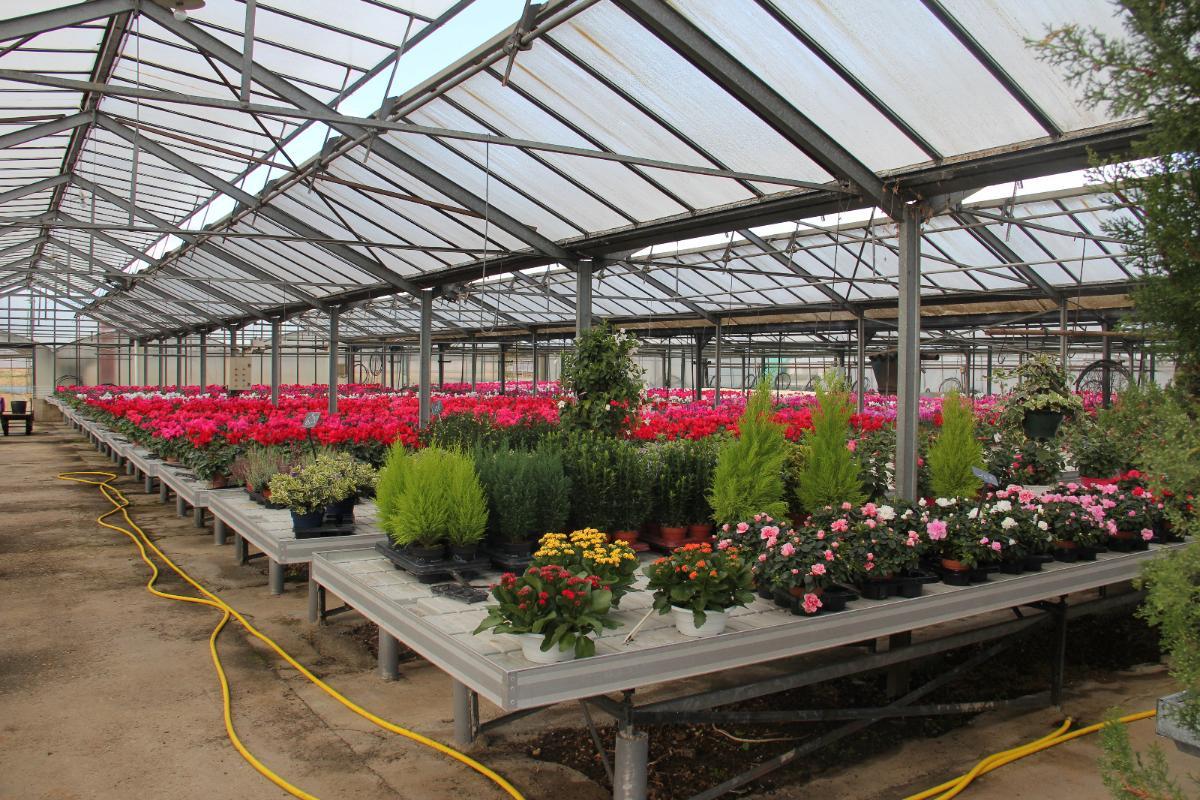 Plantes Variées - Condamin EARL à Chasselay (69)