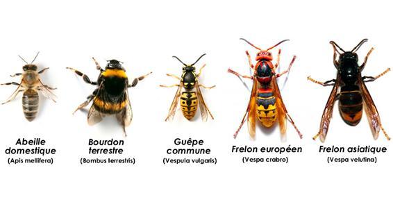 Anidiet Hygiène - Héminoptères