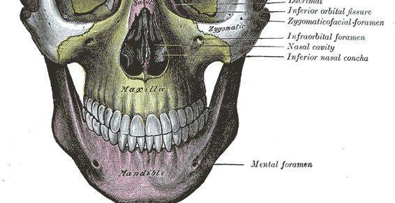 dysfonctions temporo-mandibulaires -occlusion dentaire.