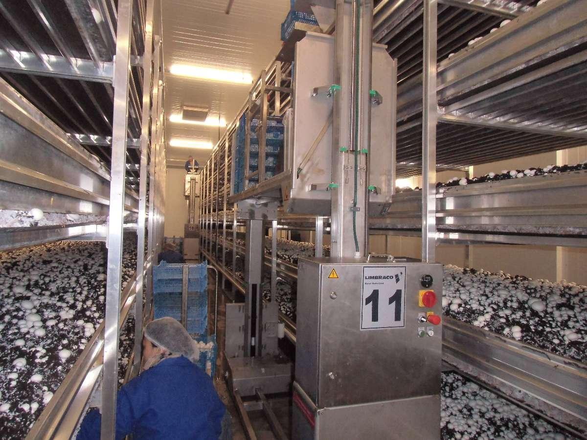Production et vente de champignons dans le Calvados (14)
