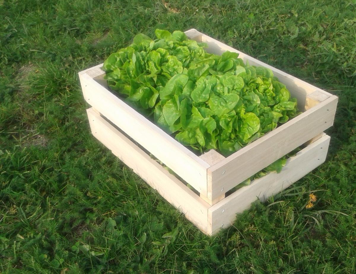 Caisse ancienne 40 par 30 avec salade 1