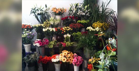 Arrivage de fleurs fraiches 2 à 3 fois  semaines