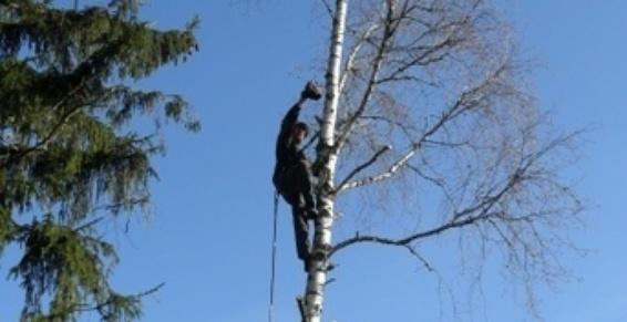 Thiers Paysages situé à Thiers dans le Puy-de-Dôme  s'occupe également de l'élagage d'arbres