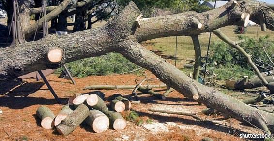 Elagage abatage arbre coupé rondins bois