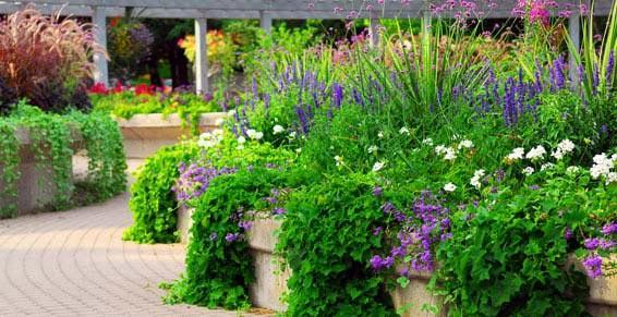 Main Verte - Paysagiste - Jougne - Massif de fleur