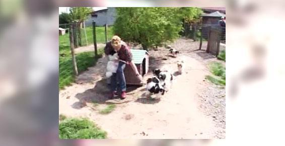 Petits chiens Mizerieux 42