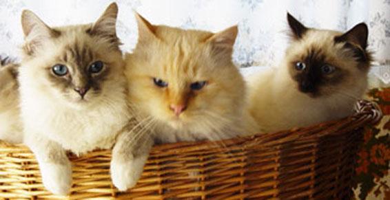 L'Orée du Bois de Narfait - élevage de chiens de chats