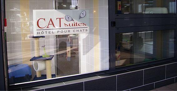 pensions chiens chats - cat suites